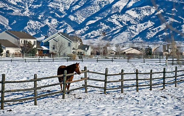 December in Montana stock photo