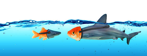 Deception Concept - Disguise Between Shark And Goldfish Masquerade and concept of hiding the truth imitation stock pictures, royalty-free photos & images