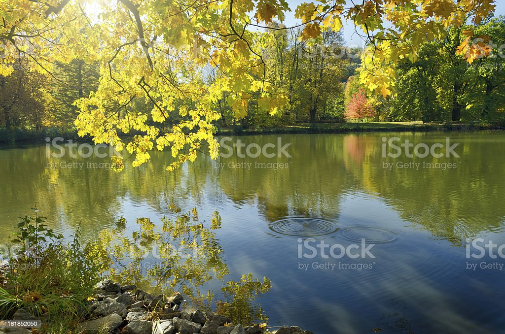 deciduous forest in autumn maple at a lake stock photo