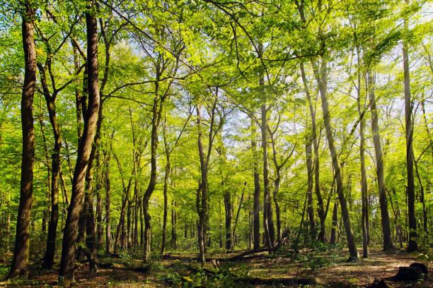 Laubwald im Frühjahr – Foto