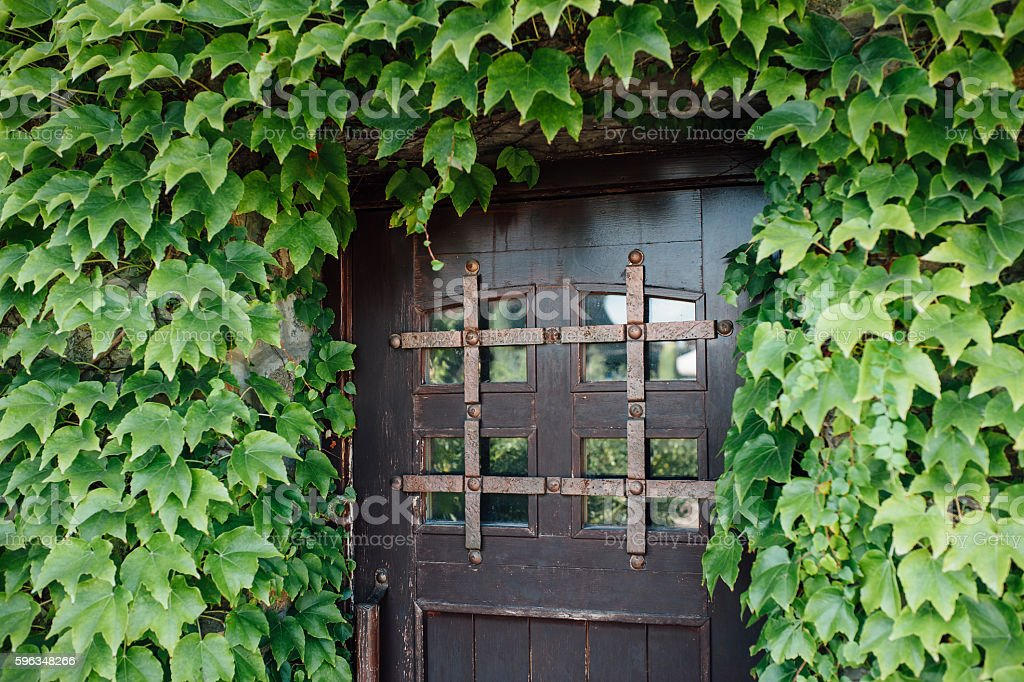 deciduous forest thickets on the wall at home royalty-free stock photo
