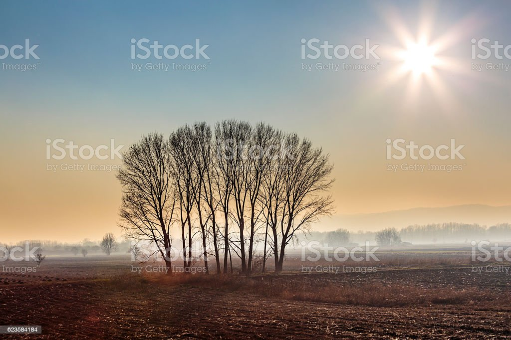 Deciduous tree lane in winter morning mist stock photo