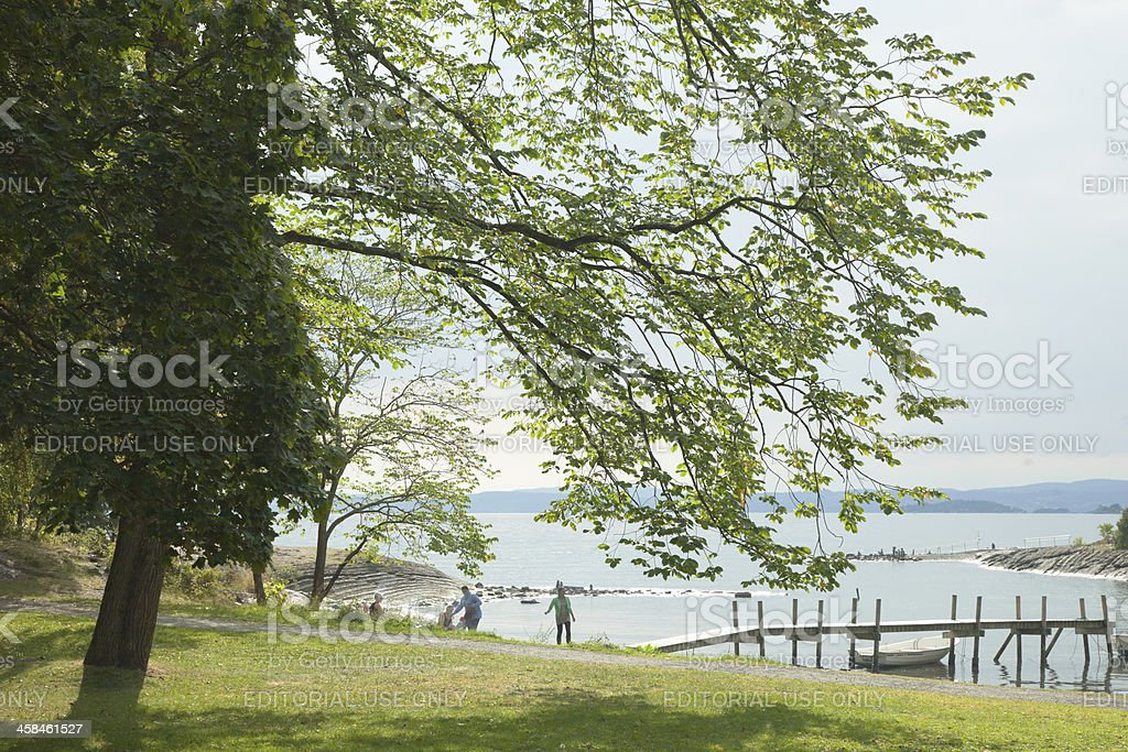 Deciduous trees and  people relaxing on the beach. royalty-free stock photo