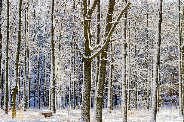 deciduous trees covered with snow against the apartment building - stockwerke des waldes stock-fotos und bilder