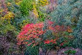 Deciduous trees in autumn.