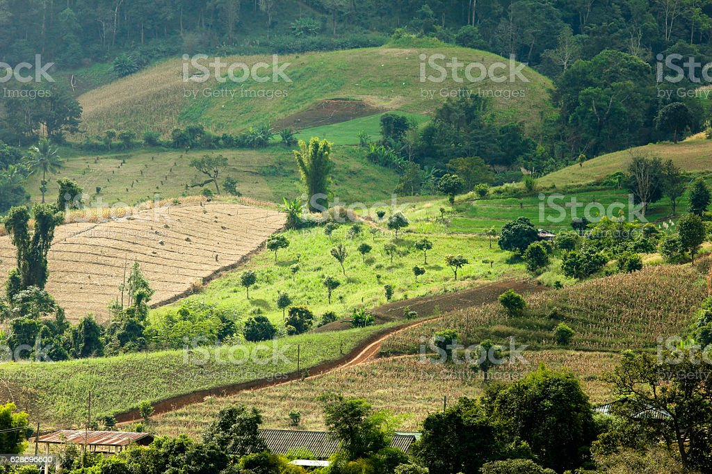 Decimated deforestation mountains of in northern part of Thailand stock photo
