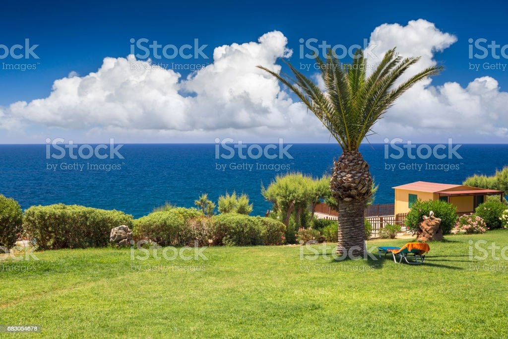 Deck chair on the lawn under the palm trees foto de stock royalty-free