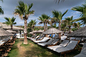 Sky, Sun, Palm Tree, Tropical Climate, Summer, Izmir