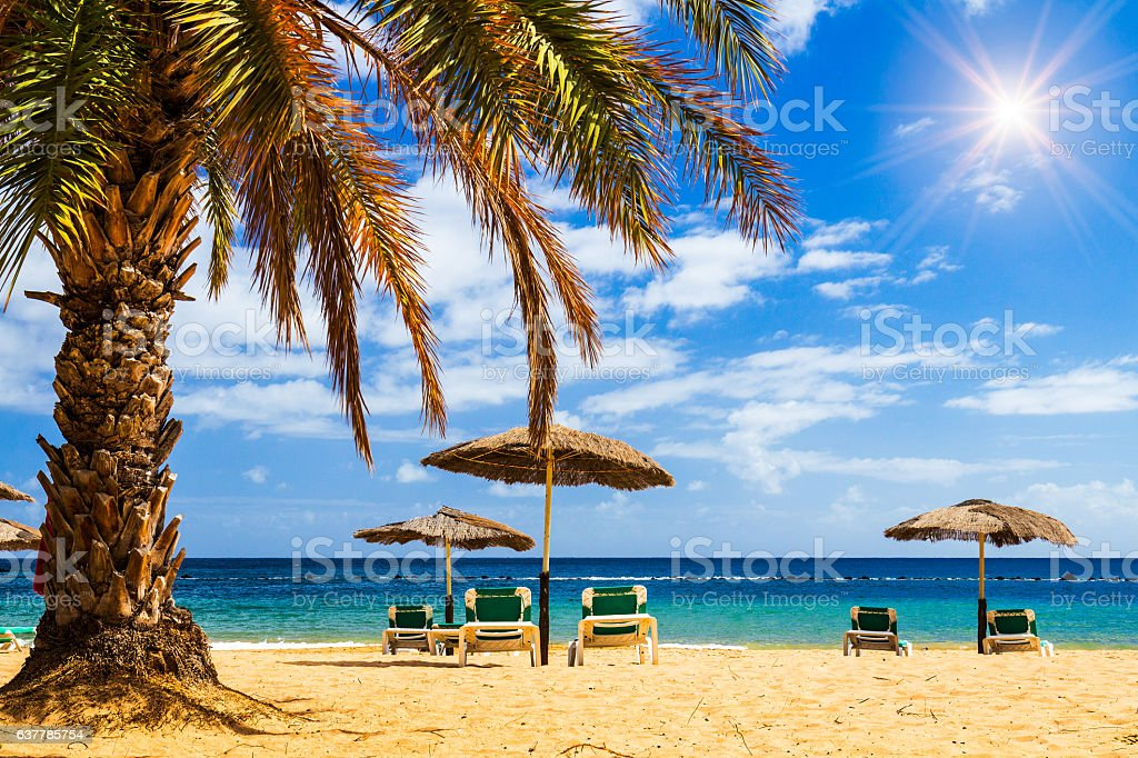 Deck chairs under umbrellas and palm trees on beach stock photo