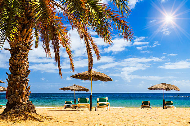 deck chairs under umbrellas and palm trees on beach - golf sommar skugga bildbanksfoton och bilder