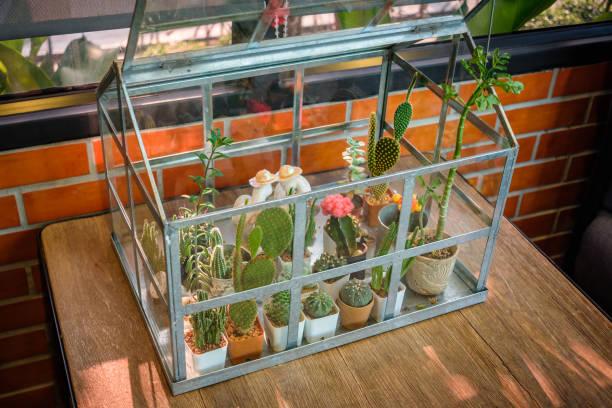 Decor Cactus Greenhouse
