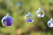 Decor details with fresh flowers. Flower buds in glass beads suspended in the air.
