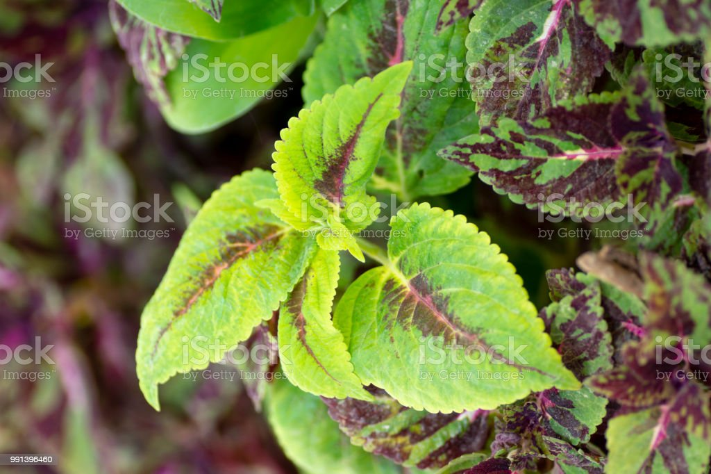decor plant leaves stock photo