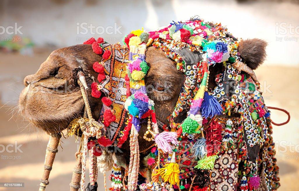 Décorées dans le dos de chameau Pushkar foire. Rajasthan, Inde photo libre de droits