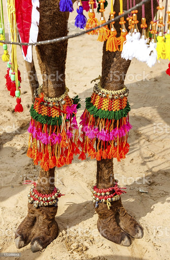decorated camel foot in India royalty-free stock photo