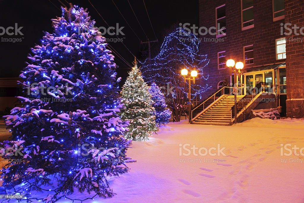 Decorated Christmas Trees in front of a City Office Building stock photo
