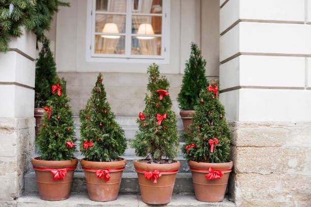 weihnachtsbaum geführt in töpfe in der nähe von altes haus - weihnachten haus dekoration stock-fotos und bilder