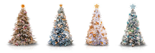 Decorated Christmas Trees on White stock photo