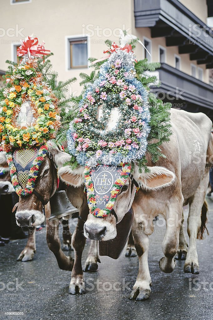 Decorated Cows in Austria stock photo