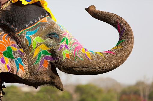 Decorated elephant.