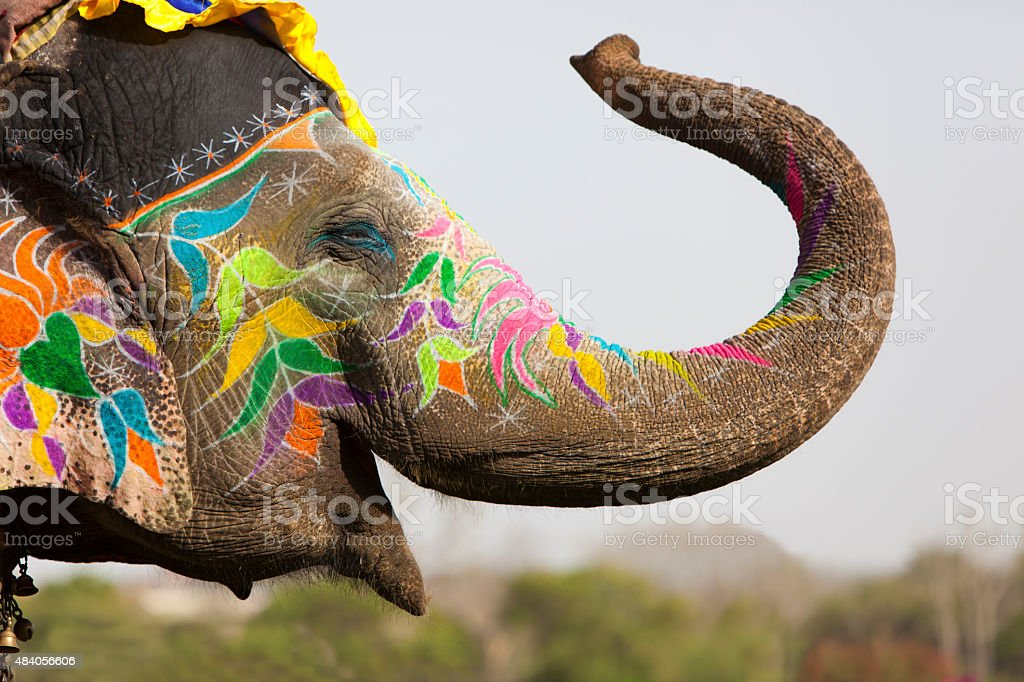 Decorated elephant. stock photo