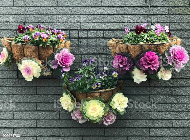 Decorated hanging flower pot of ornamental cabbage and pansy on ceramic tile wall