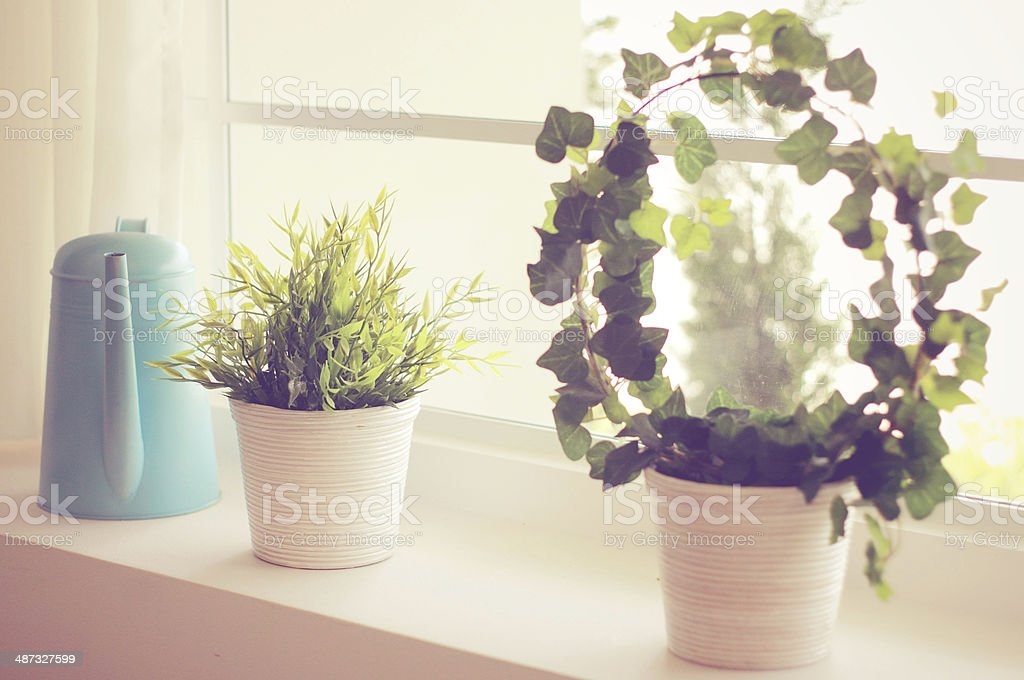 Decorated plant and watering can with retro filter effect stock photo