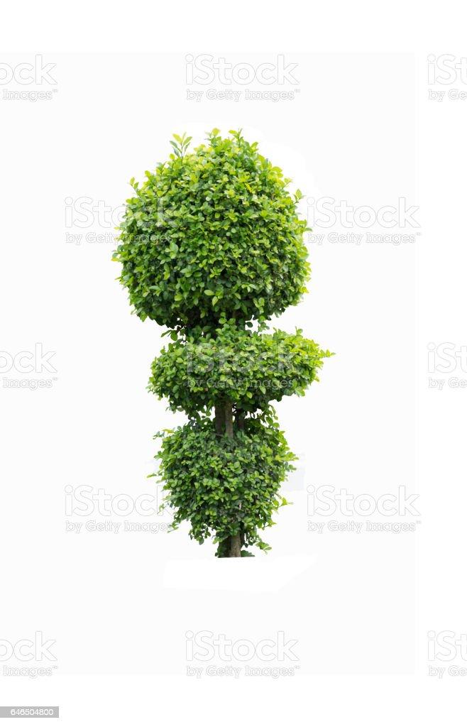 Décoration d'arbre ou arbuste décoratif sur fond isolé - Photo