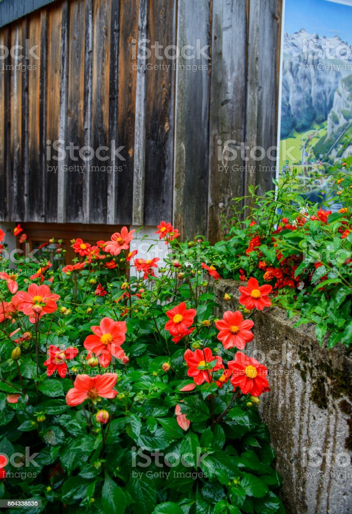 Beautiful flowerpots on a wooden wall of old building in europe,