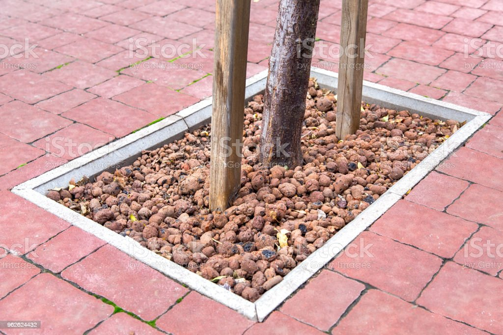 decorating tree roots with expanded clay in a landscape design. stock photo