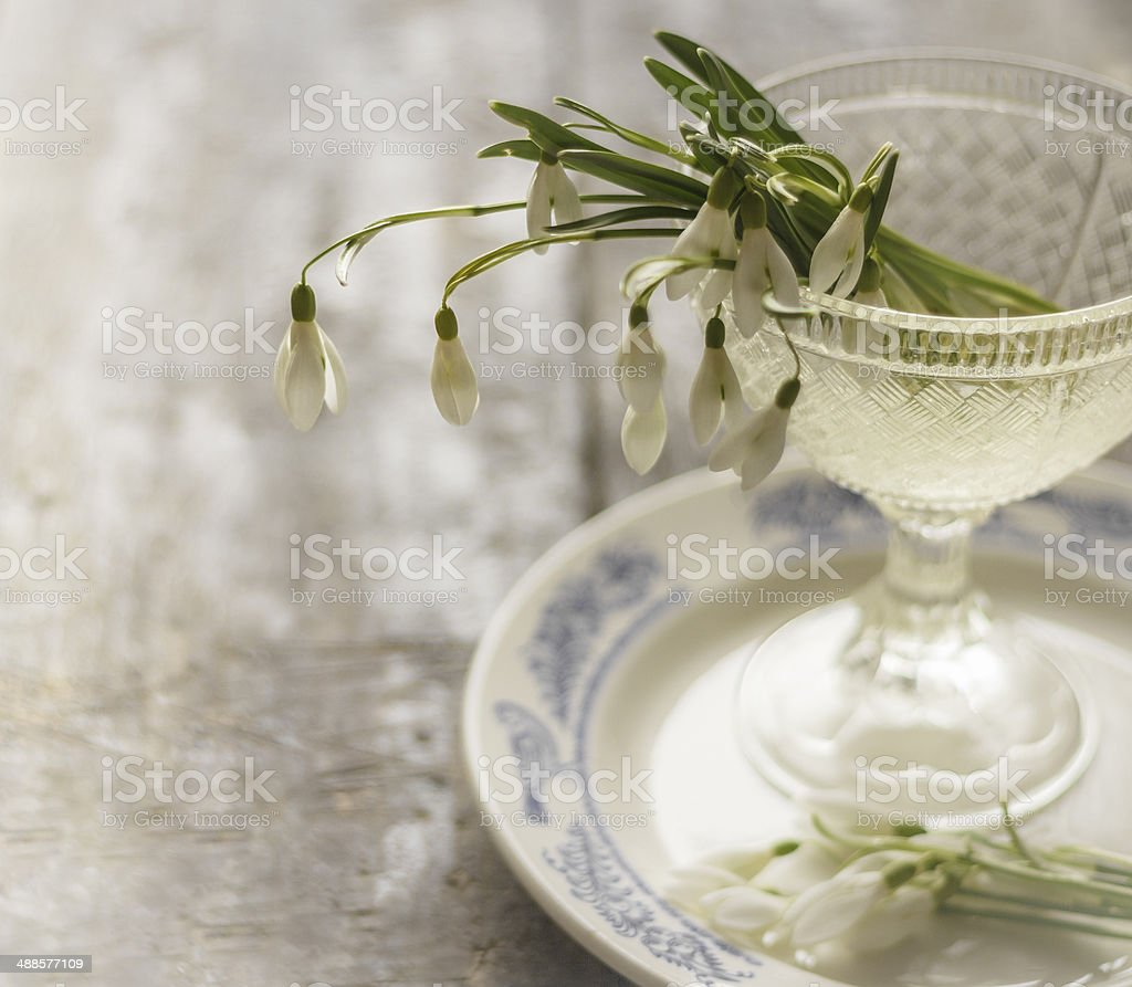 Decoration card. Snowdrops flowers on plate. stock photo