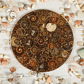Decoration of fossilized Ammonites, remains of ancient molluscs of the order cephalopods