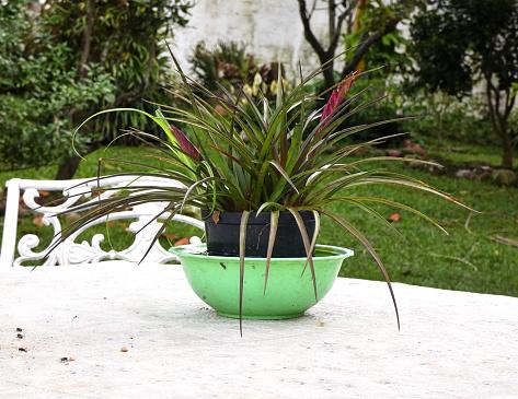 Decoration plant in a flowerpot