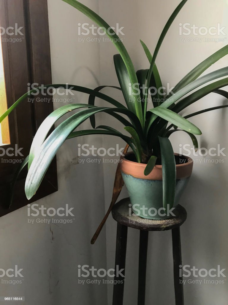 Decoration plant royalty-free stock photo