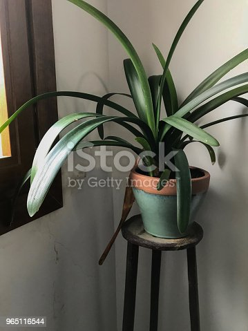Decoration Plant Stock Photo & More Pictures of Floor Plan