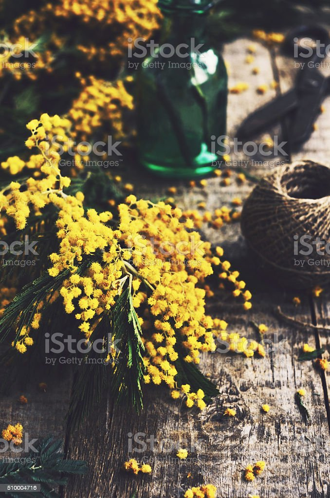 Decoration with bunch of mimosa, scissors and green bottle stock photo