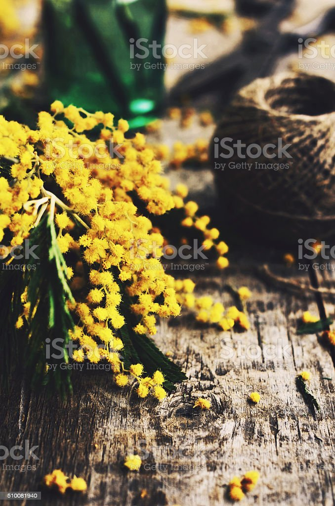 Decoration with bunch of mimosa, vintage scissors and green bottle stock photo