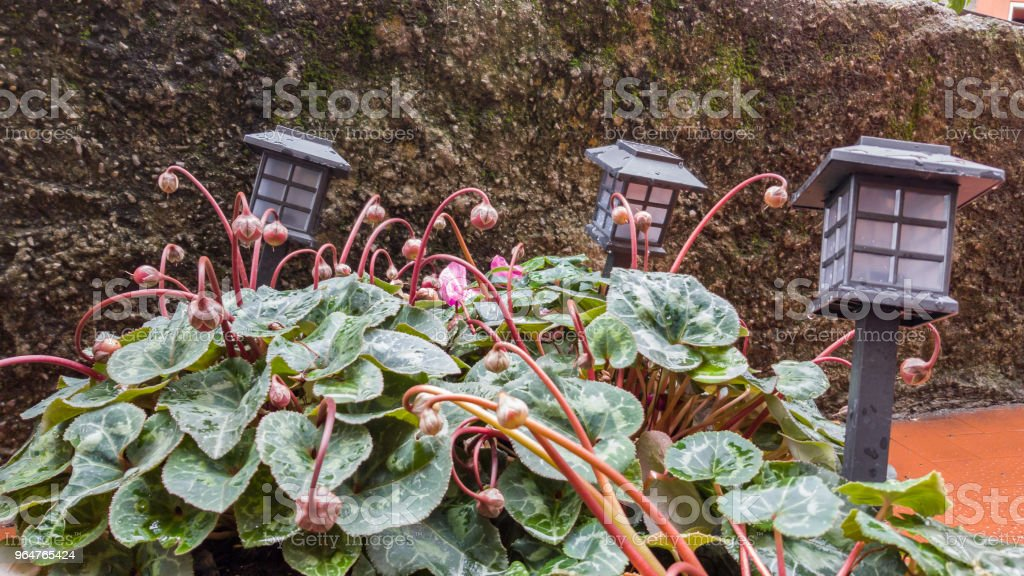 Decorations for the garden in the form of lanterns in a flowerbed royalty-free stock photo