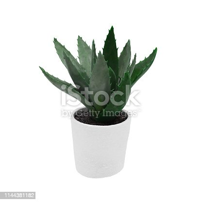 istock Decorative aloe century plant planted white ceramic pot isolated on white background. 3D Rendering, Illustration. 1144381182