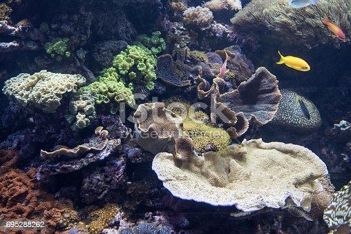 istock Decorative aquarium 695288262