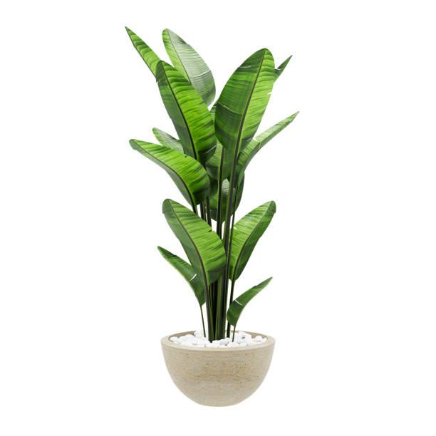 beyaz arka planda izole taş mermer vazo dekoratif muz bitki. 3d rendering, illustration. - plants stok fotoğraflar ve resimler