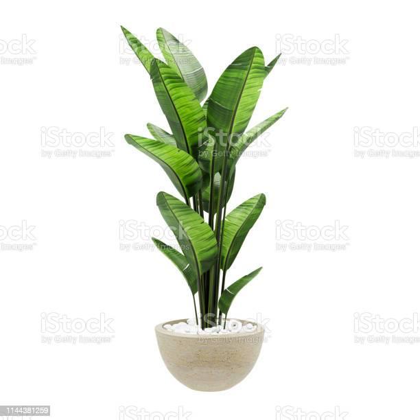Photo of Decorative banana plant in stone marble vase isolated on white background. 3D Rendering, Illustration.