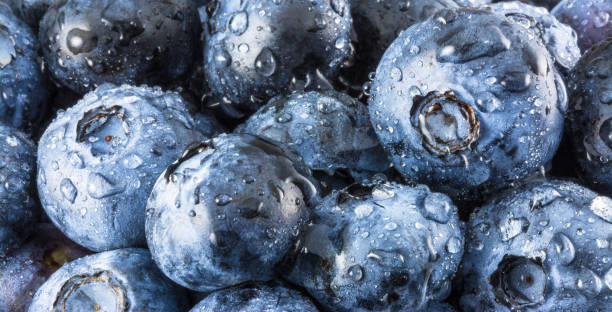 Decorative bilberries with drops of water as background stock photo
