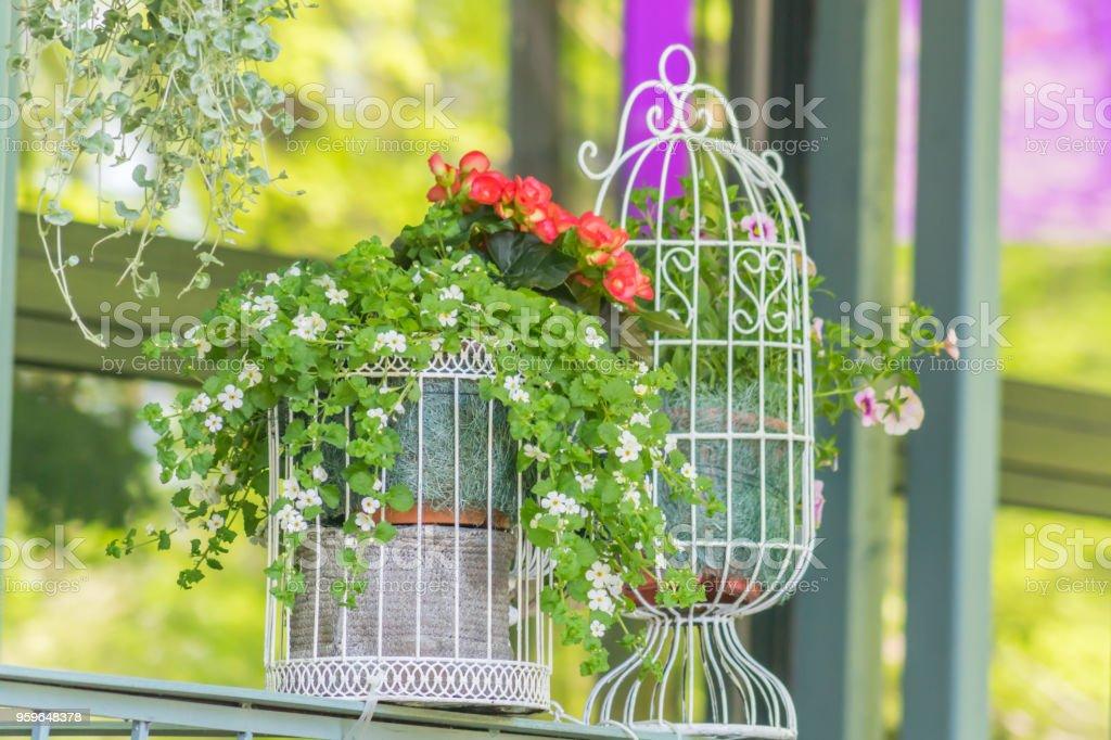 jaulas de aves decorativas con decoración de flores al aire libre, jardín y calle - Foto de stock de Aire libre libre de derechos