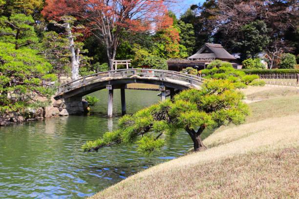 pont décoratif dans le jardin de koishikawa korakuen, okayama, japon - paysage mois de mars photos et images de collection