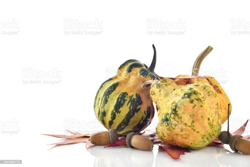 Decorative colorful mini pumpkins stock photo