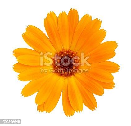 Decorative daisy bright orange color on a white background