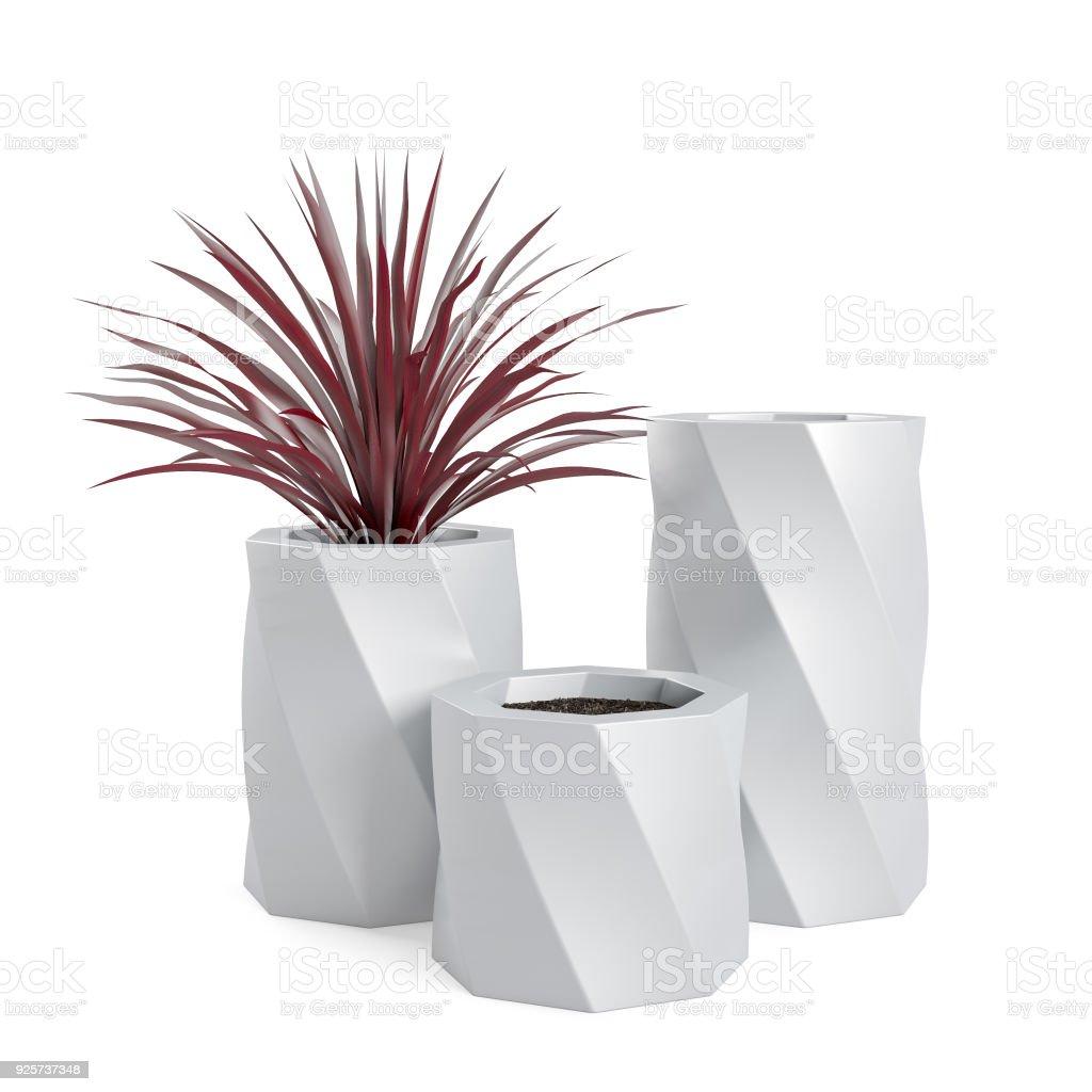 Decorative Dracaena marginata plant planted in white ceramic pot stock photo