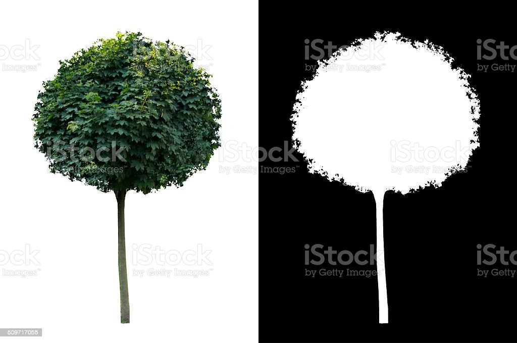 Decorative evergreen tree 2 stock photo
