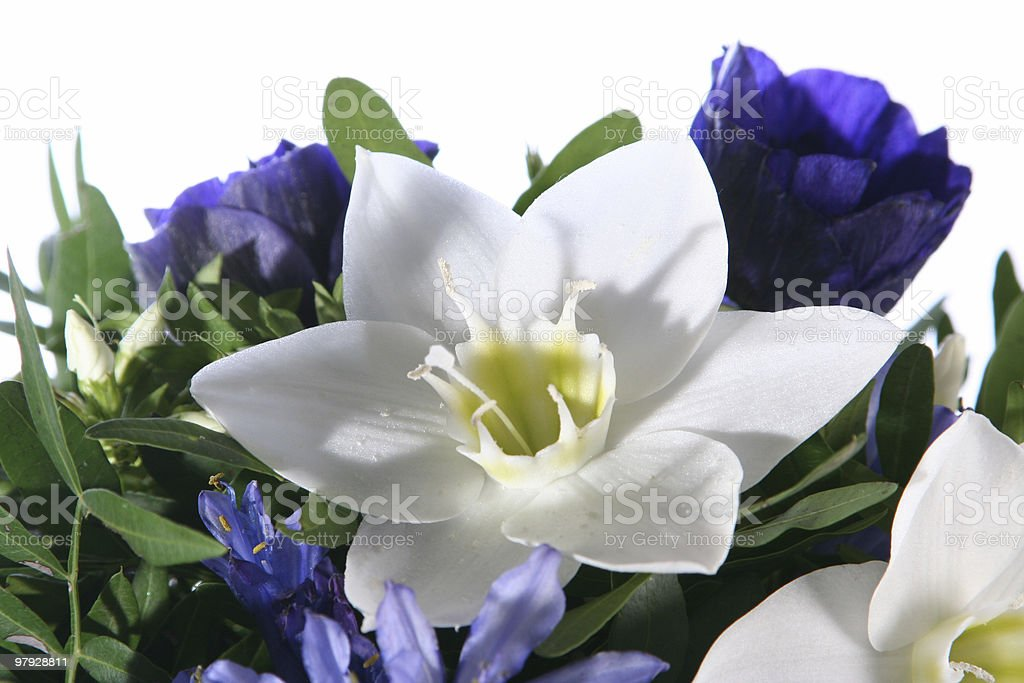 Decorative flower narcissus royalty-free stock photo